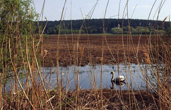 Ein Paradies für Wildvögel